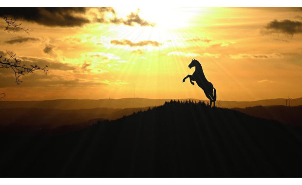horse standing on back legs silhouette at sunset